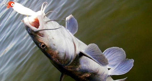 Fishing in Clear Lake, CA